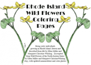 Rhode Island Wild Flowers Coloring Pages