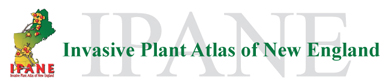 Invasive Plant Atlas of New England Logo