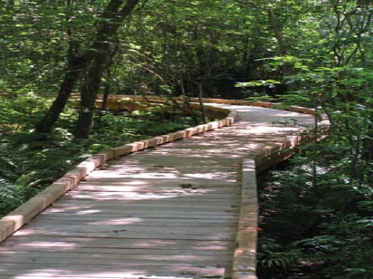 Boardwalk at Dundery Brook Trail, Little Compton, RI