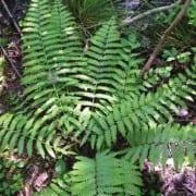 ri fern dundery trail ri