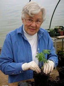Sigrid Hewit-transplanting