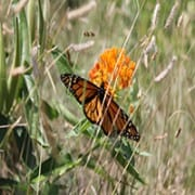 2015 Native Plant Conference field with butterfly