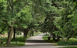 road with trees at swan point cemetery