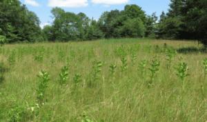 meadow at Maxwell Mays